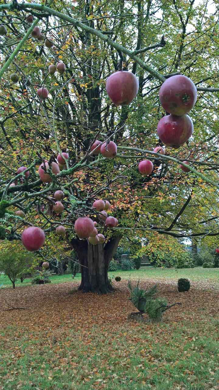 Lingards Apple Tree